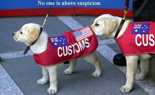 customs-dogs.jpg